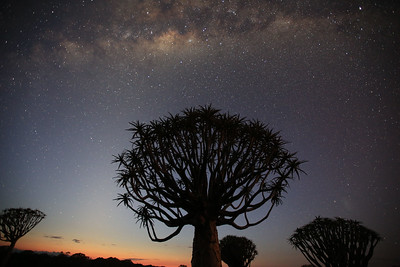 Quivertree forest with milkyway