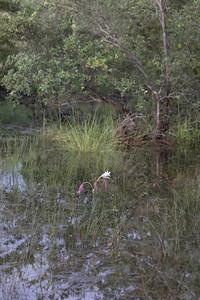 Cubango River