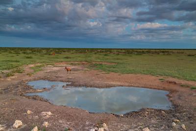 Etosha National Park landscapes