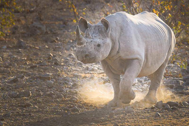 Rhino's come out!