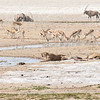 Wildlife by waterhole