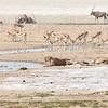 Wildlife by waterhole