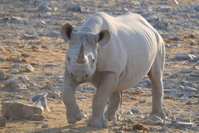 I would not argue with him...