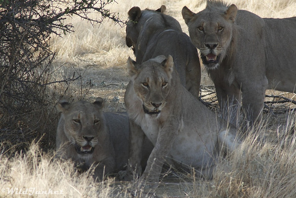 Photoblog: Wildlife Encounters in Etosha National Park, Namibia