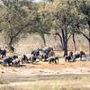 Elephants arriving at the Okavango River
