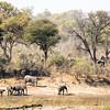 Still more elephants