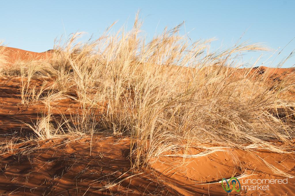 Namib Desert Plants - Namibia