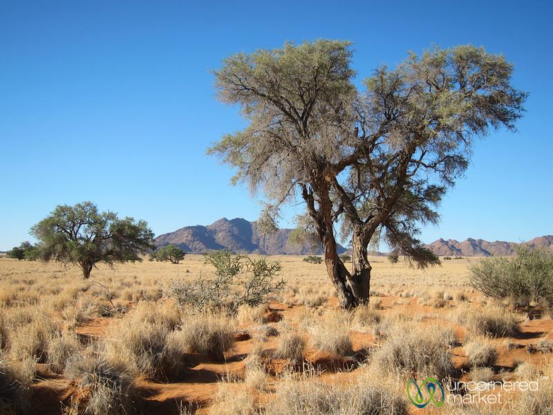 Desert Walk, Namib Desert - Namibia