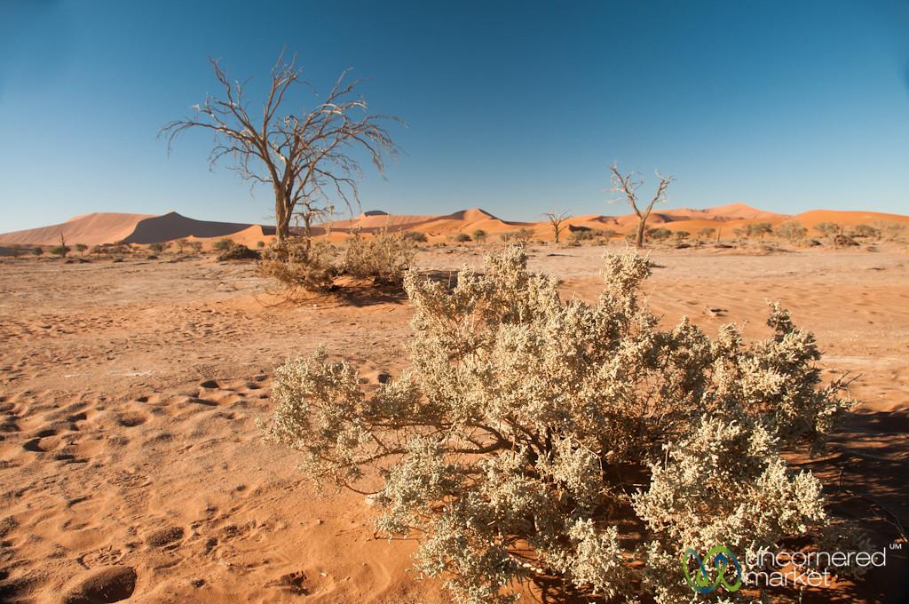 Desert Brush and Trees - Namib Desert, Namibia