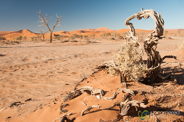 Gnarly Trees and Desert - Namib Desert, Namibia