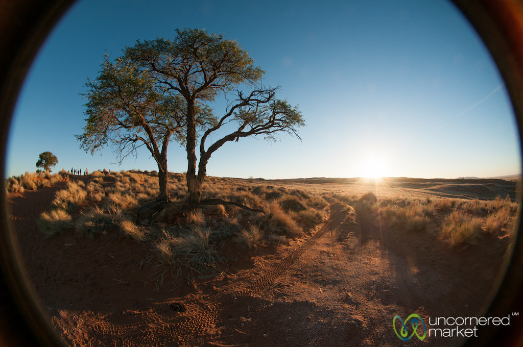 Namib Desert and Tree at Dusk - Namibia