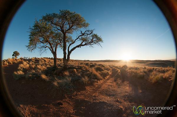 Namib Desert and Tree at Dusk - Namibia