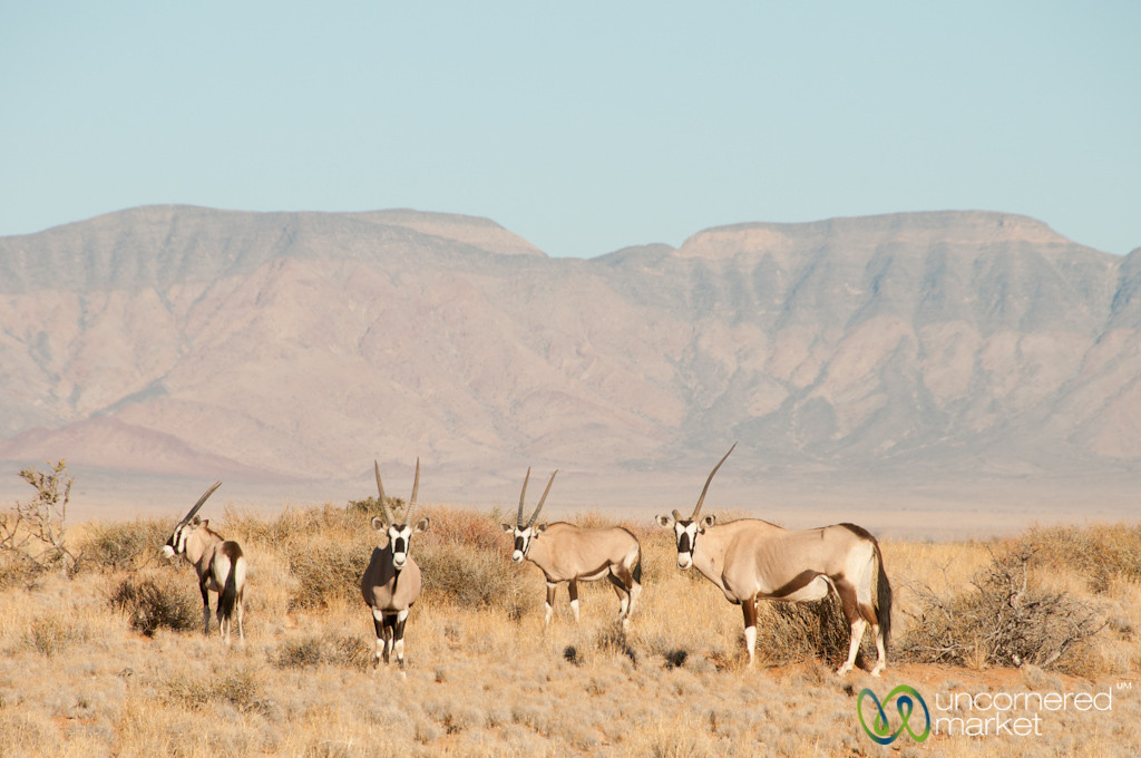 Gemsbok in the Namib Desert - Namibia