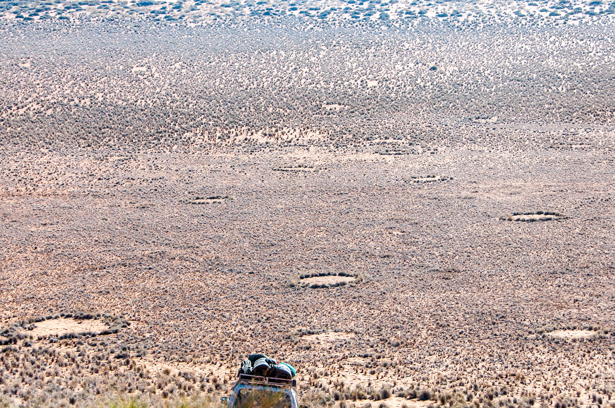 Fairy Circles in the Namib