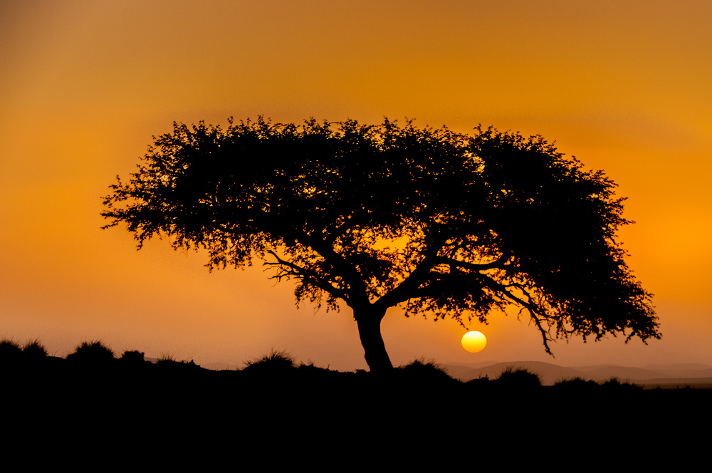 Solitary Tree at Sunset in the Desert of Namibia