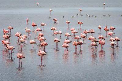 A group of flamingos in Namibia