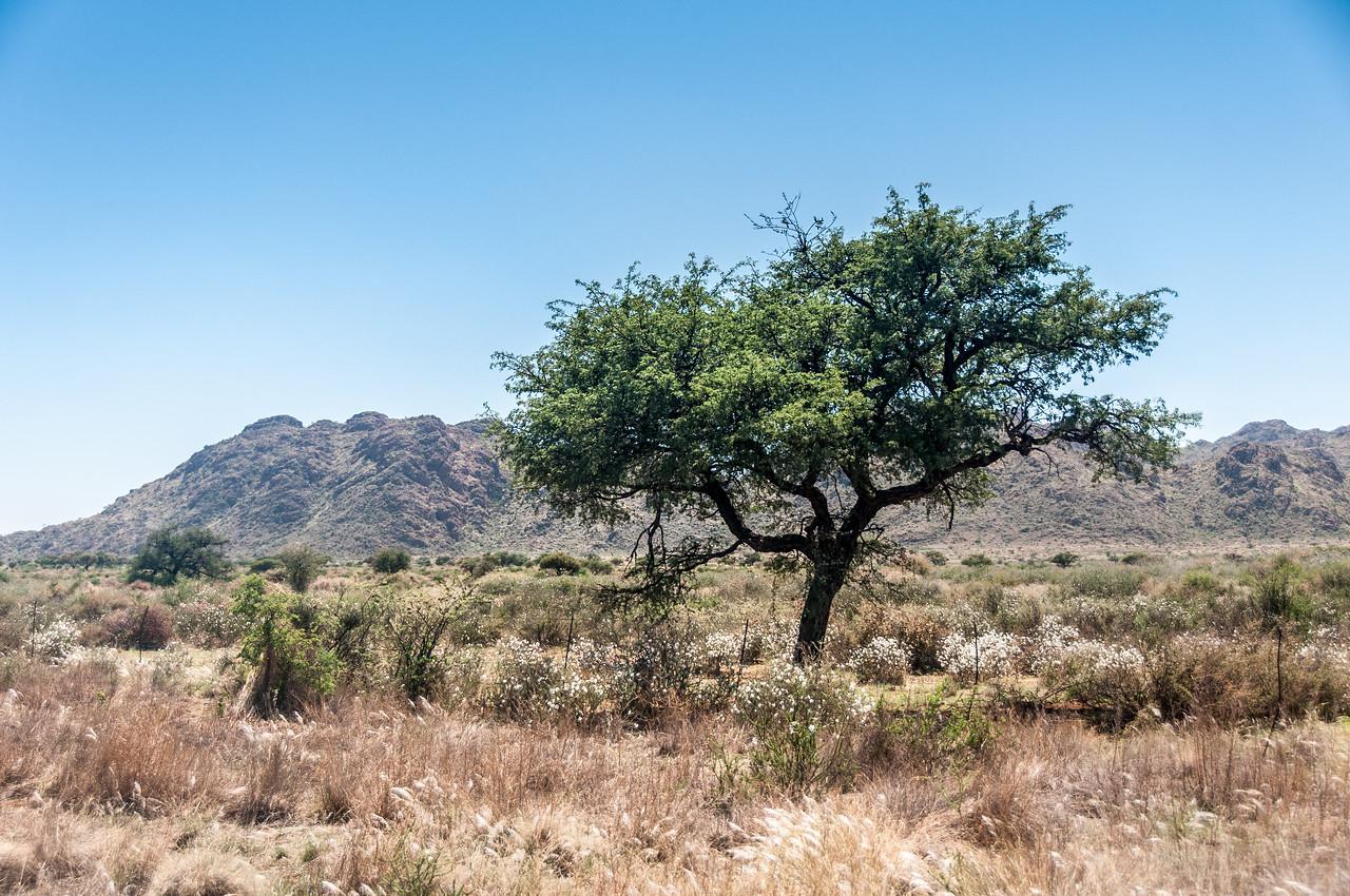 Grassy part of the Damara Village in Namibia