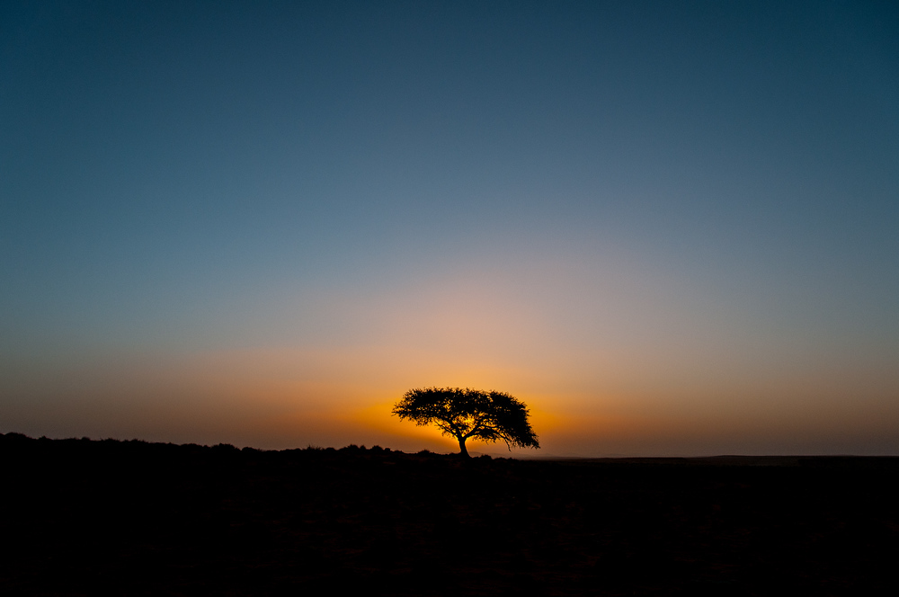 A Lonely Tree at Sunset in the Namib Desert