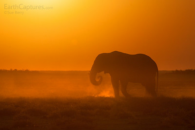 Elephant at Sunset, chudop triangle, etosha, Namibia