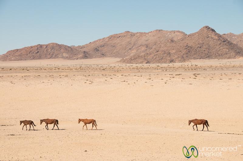 Wild Horses of Aus, Namibia