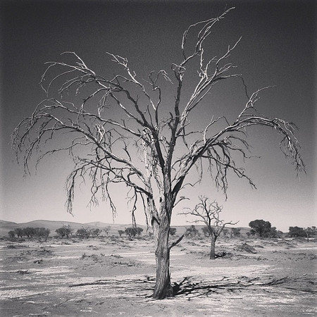 Deserts, land of contrasts and shadows. Deadvlei, Namib Naukluft Park, Namibia.