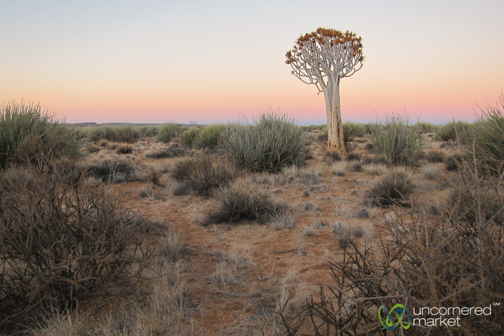 Quiver Tree at Sunset - Namibia