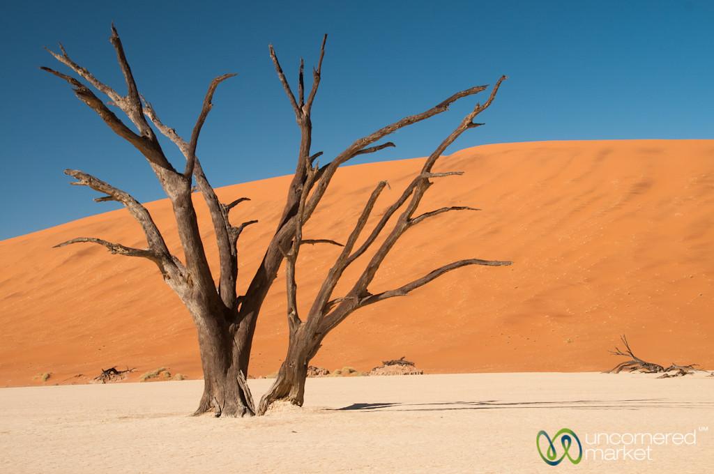 Deadvlei Landscape and Trees - Namib-Naukluft National Park, Namibia