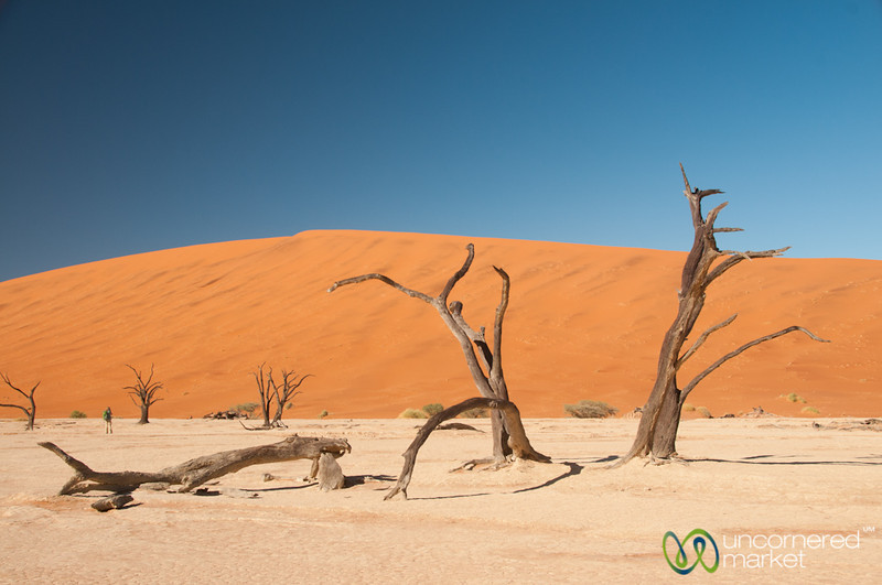 Deadvlei Trees - Namib-Naukluft National Park, Namibia