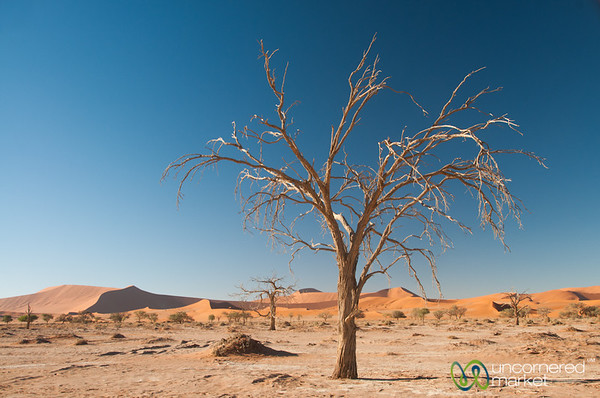 Tree in the Namib Desert - Namibia