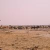 Za 3679 Gemsbokken, Springbok, Zebra's , Gnoes en Giraffe bij Andoni