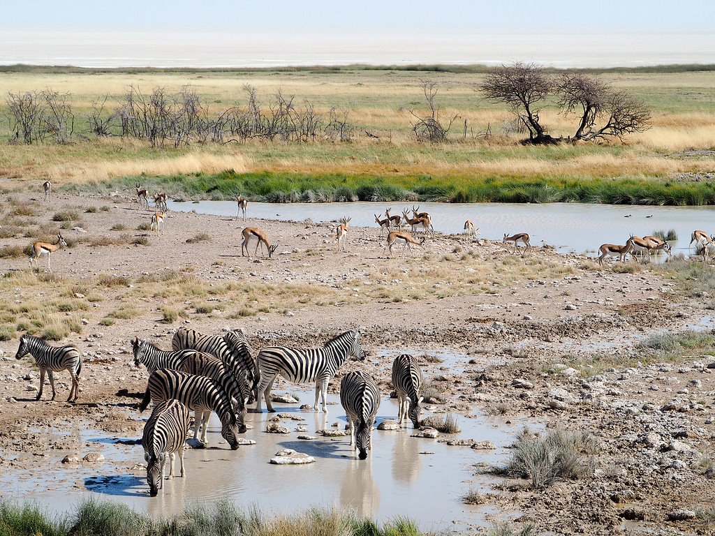 Watering holes in Etosha National Park