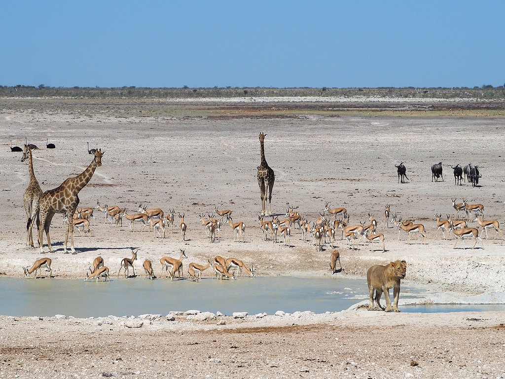 Animals at a watering hole in Etosha National Park