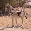 Za 3318 Zebra