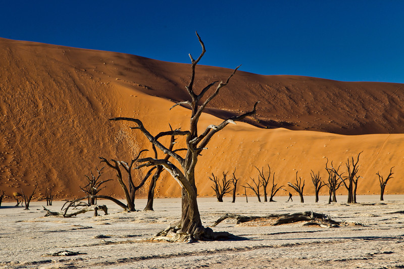 A late morning shot at the Dead Vlei in Namibia. A river once flowed through this area,and the banks were obviously lined by many trees. Over the centuries, the river dried up, and the trees eventually petrified in place. If you look closely, you will see a single human being between two trees. He's not petrified!!!  I thought he added some perspective to the shot. We walked in here very early in the morning to get as many shots as we could before a few hundred other people eventually showed up and lined the top of the dune.