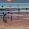 Pelicans at Sunset, Walvis Bay, Namibia