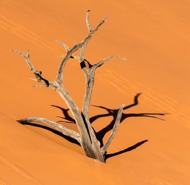 The Desert Prevails
