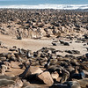 Fur Seal Colony - about 100,000 seals in all were here - Near Walvis Bay, Namibia.