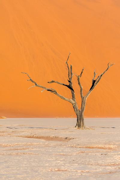 Skeleton In The Dunes