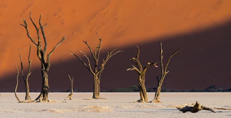 Skeleton Trees At Deadvlei