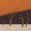 Skeleton Trees At Deadvlei