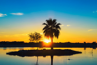 Sunset behind a palm tree silhouette on a small island in a lake in Namibia