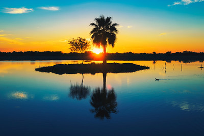 Palm tree silhouette with reflection in a lake at sunset, Namibia, Africa