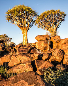 Quiver trees at Keetmanshoop