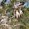 Storks and Cormorants