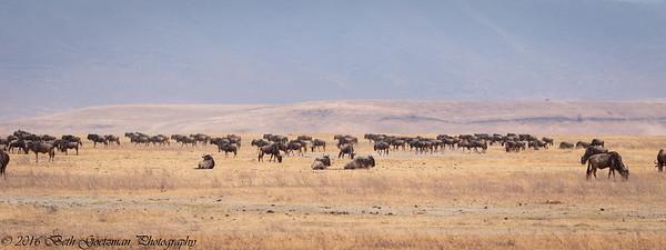 gnu landscape - Negorongoro NP - Tanzania