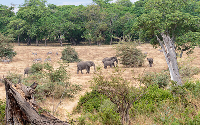lelephant landscaape - Negorongoro NP - Tanzania