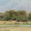 Zebra landscape - Negorongoro NP - Tanzania