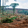 Deforestation in Nigeria
