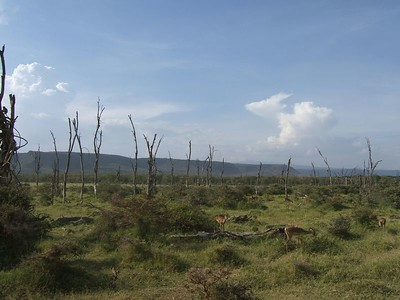 On the edge of the Great Rift Valley