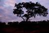 Africa--6830